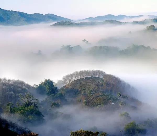 基諾山普洱茶山頭地理位置及口感特點