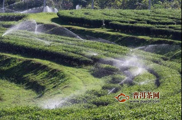 夏季茶园干旱、热害及其防护技术
