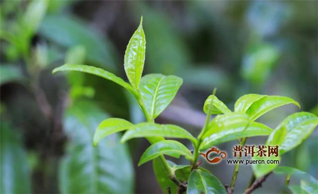 茶企年注册量十年增649%