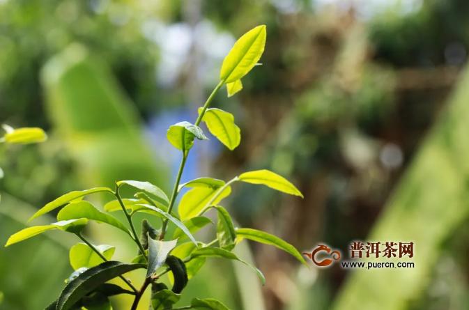 庐山市人大开展茶叶产业调研