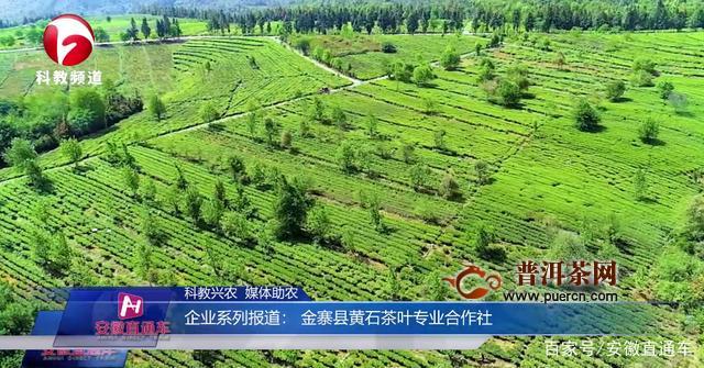 金寨县黄石茶叶专业合作社上安徽电视台《安徽直通车》
