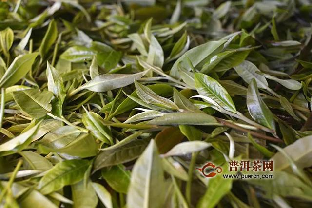彩农茶详解鲜叶质量