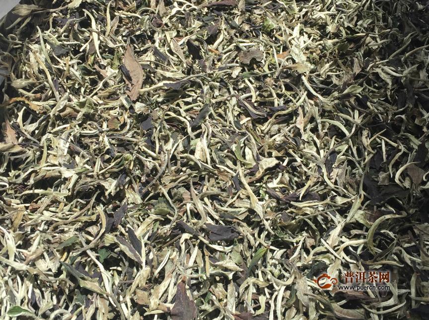 白茶的主要产地是哪里