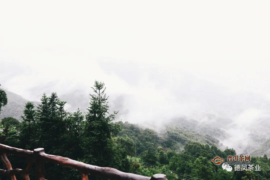茶山里的旅行:藏在林海茶园间的民宿