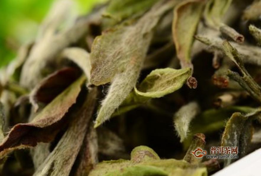 白茶茶叶是什么茶