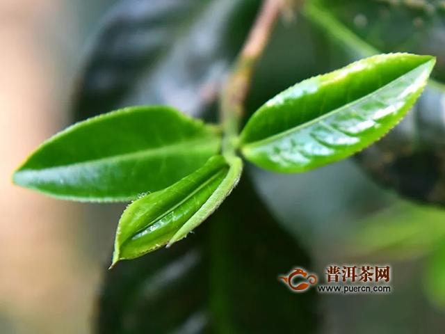 彩农茶:陆羽《茶经》