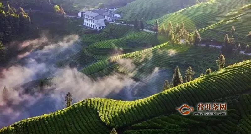 《湖北省促进茶产业发展条例(送审稿)》立法调研座谈会在武汉召开