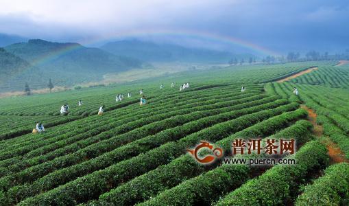 赤壁青砖茶市场现状