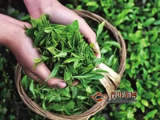数字经济赋能普洱茶、咖产业快速发展
