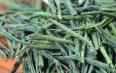 六安瓜片绿茶的冲泡技巧