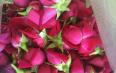 含硫玫瑰花泡水易掉色是不是真的