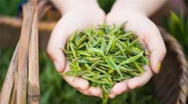 2020年中国及全球茶行业市场规模及发展趋势分析