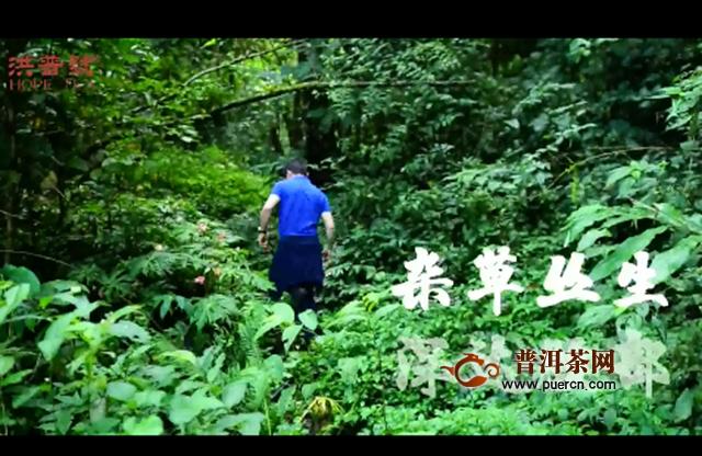 探秘灵魂深处的微微香甜:2019年洪普号探秘系列雪藏