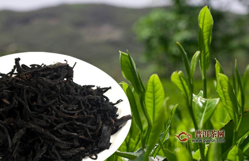 泾阳茯茶黑茶如何