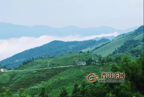 黔东南州雀鸟村:茶叶产业化让群众腰包鼓起来