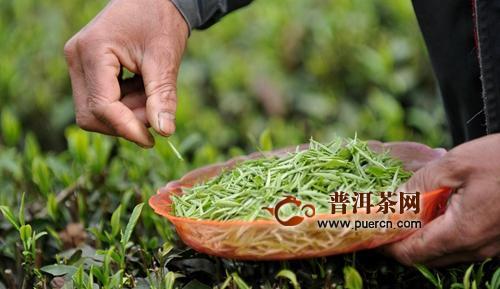 贵州立法加快建设茶产业强省:拟集中树立四大类茶公用品牌