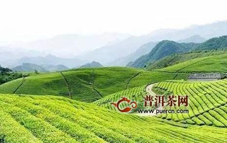 加快茶产业强省步伐《贵州省茶产业发展条例(草案)》首次提请审议