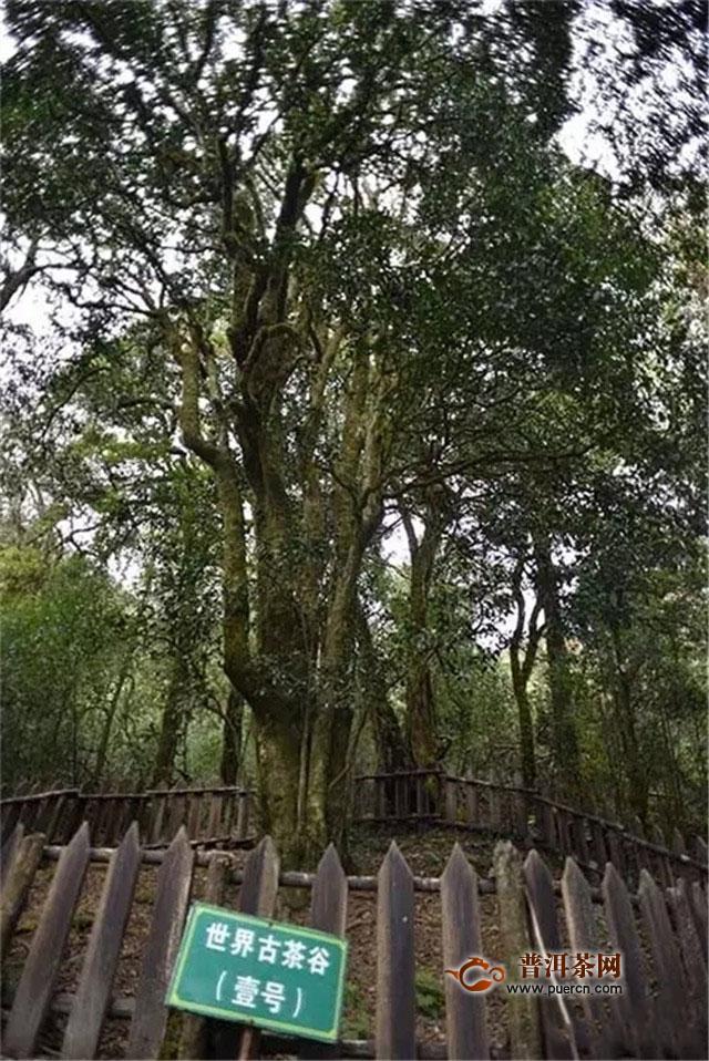 彩农茶:临沧茶不值得存放?