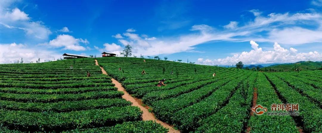 强强联手!中茶和普洱市又有新动作!
