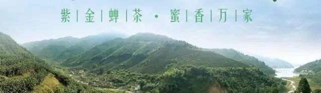 紫金茶人物介绍篇:紫金蝉茶先锋人物陈炯昌