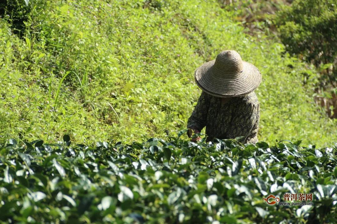 茶产业如何打造下一个万亿级目标?