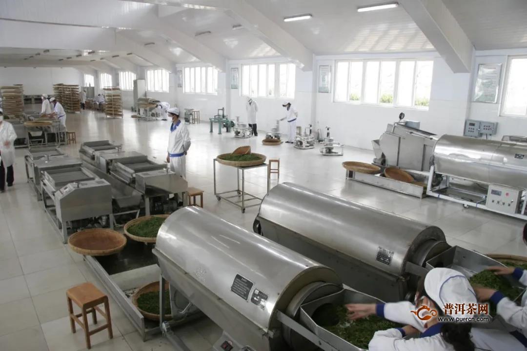 日照绿茶发展史