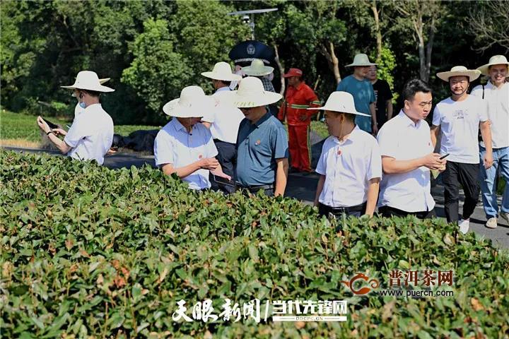 全球最大绿茶出口企业与中国茶叶种植面积最大省份合作啦!