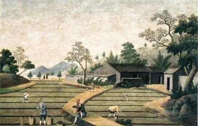 彩农茶:中国茶文化——制茶历史