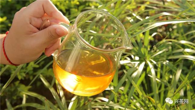 """下半年茶行业""""博弈""""中:茶企的大机会与大挑战!"""