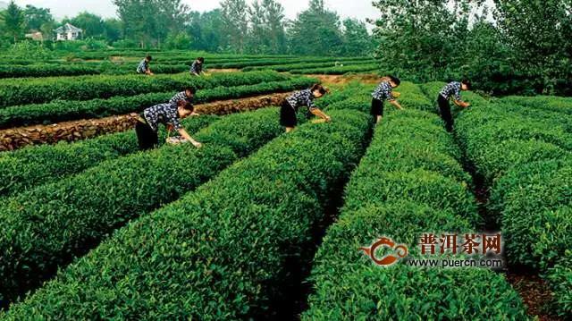 2020中国日照茶产业标准与品牌发展峰会在日照市举行