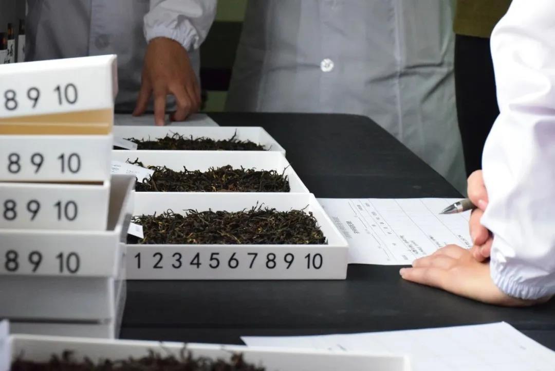 九月中高级评茶员开班:学一技能通一茶品