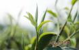 普洱茶鲜为人知的历史