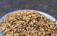 喝大麦芽的作用与禁忌