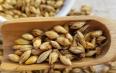大麦的功效及其用途