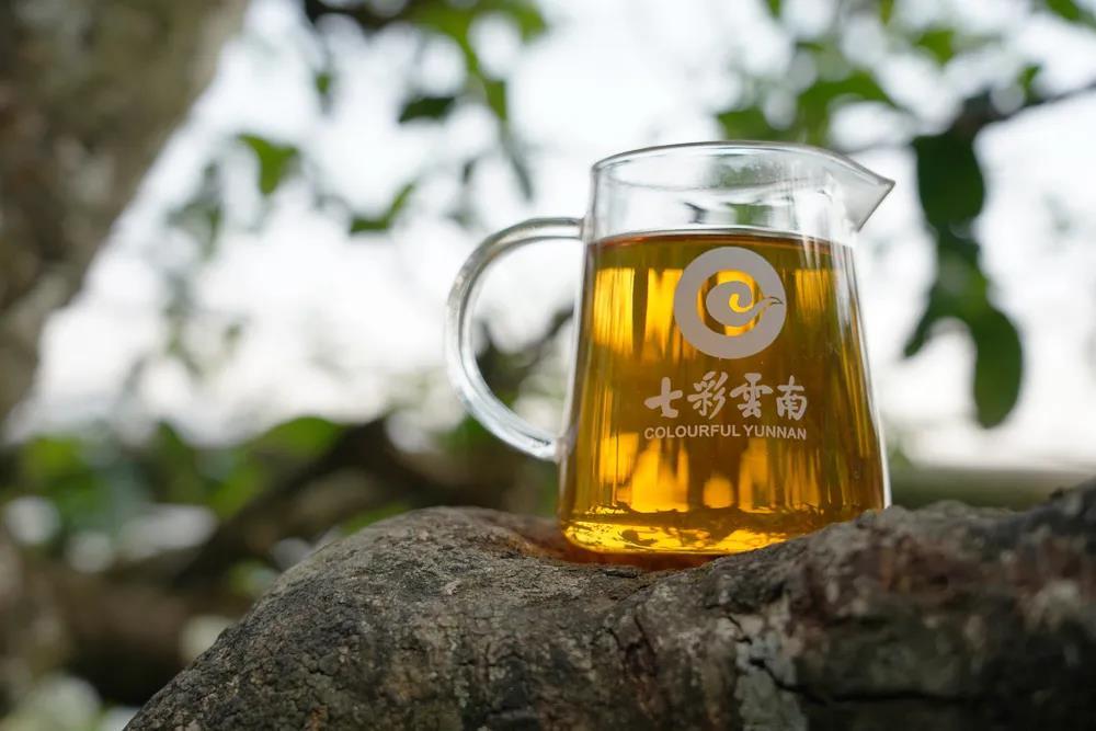 他们用一杯正山古树茶王,重塑了业界古树茶王典范
