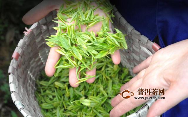 安吉白茶正常有什么功效