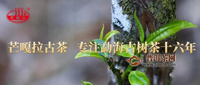 芒嘎拉古茶第十五期茶山游学圆满收官