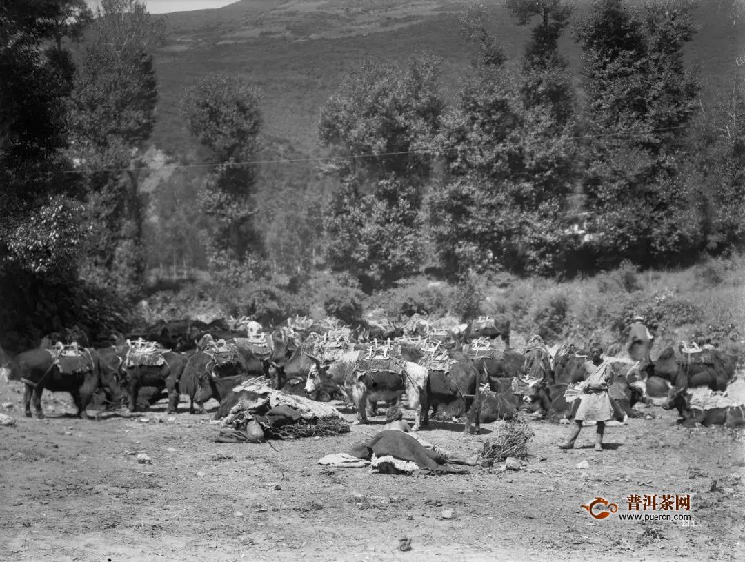 雅安与藏茶跨越1300年的茶马往事