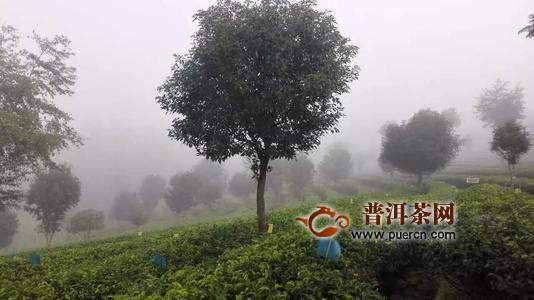 """普洱市政府与中国茶叶股份有限公司""""加好友""""双方签订合作框架协议"""