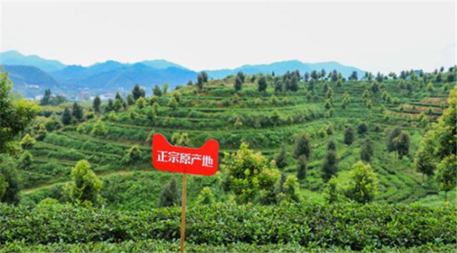天猫正宗原产地落地中国黑茶之乡