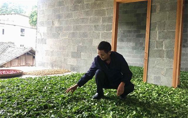 湖北毛坝五二村:一片茶叶带富一方百姓