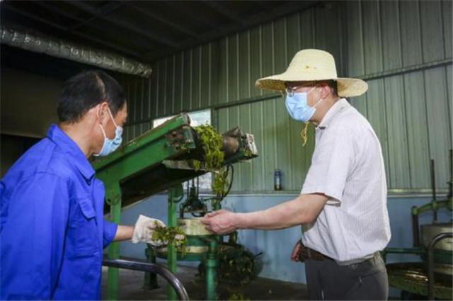 一片小茶叶 承载大梦想——鑫鼎集团产业扶贫纪实