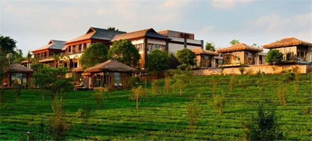云南近年来茶与文旅康养结合之势日盛