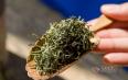 时常饮用绿茶的功效与作用