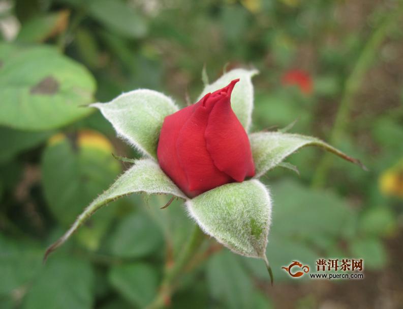 在市场上玫瑰花茶多少钱一斤