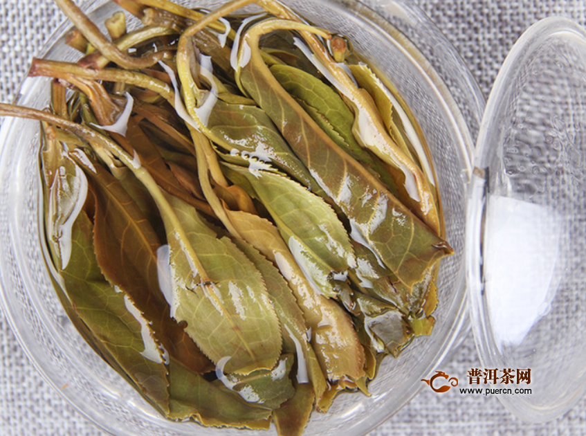 白茶是什么茶类的茶叶