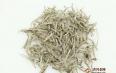 白茶对痛风的作用有哪些