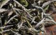 白茶的功效和价格简述
