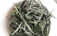优质白毫银针属于什么茶