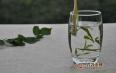 白牡丹茶的药用价值及饮用禁忌